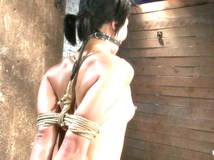 Asian Milf With Huge Nipples Is Made To Cum Hardpulled To Her Tip Toes With A Brutal Crotch Rope -.