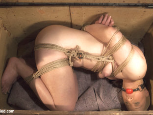 Sophia Locke & Cheyenne Jewel In The Collectors - Hogtied